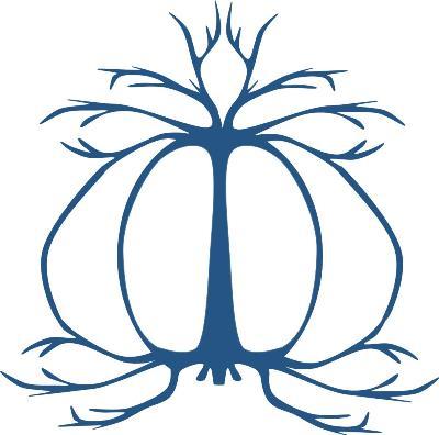 Roots est une méthode qui permet des itérations entre méthodes déductives (les racines) et inductives (les branches)
